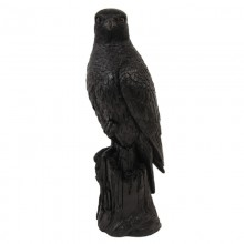 Coinbank black falcon